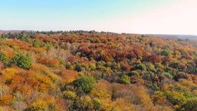 Εναέρια άποψη μήκους σε πόδηα Χρωματισμένα δέντρα φθινοπώρου Πτήση πέρα από τα βουνά φθινοπώρου με τα δάση, τα λιβάδια και τους λ φιλμ μικρού μήκους