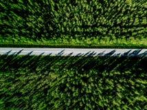 Εναέρια άποψη μιας εθνικής οδού με το κόκκινο αυτοκίνητο στη μέση του πράσινου θερινού δάσους στοκ εικόνα με δικαίωμα ελεύθερης χρήσης