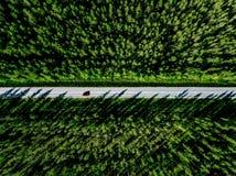 Εναέρια άποψη μιας εθνικής οδού με το κόκκινο αυτοκίνητο στη μέση του πράσινου θερινού δάσους στοκ εικόνα