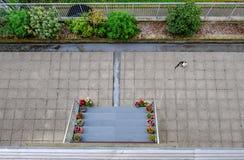 Εναέρια άποψη μιας κενής περιοχής patio με μια γραπτή γάτα Στοκ φωτογραφία με δικαίωμα ελεύθερης χρήσης