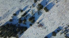 Εναέρια άποψη παγωμένου του χειμώνας δάσους που καλύπτεται στο χιόνι Στοκ φωτογραφίες με δικαίωμα ελεύθερης χρήσης