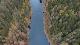 Εναέρια άποψη που πετά πέρα από τον ποταμό με το δάσος φθινοπώρου απόθεμα βίντεο