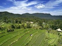 Εναέρια άποψη σχετικά με τα πεζούλια ρυζιού, Μπαλί, Ινδονησία Στοκ εικόνες με δικαίωμα ελεύθερης χρήσης