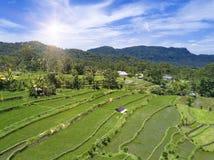Εναέρια άποψη σχετικά με τα πεζούλια ρυζιού, Μπαλί, Ινδονησία Στοκ εικόνα με δικαίωμα ελεύθερης χρήσης