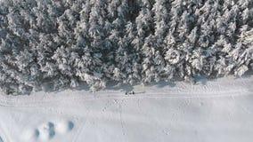 Εναέρια άποψη σχετικά με τη δασική και χιονώδη πορεία χειμερινών πεύκων με τους ανθρώπους μια ηλιόλουστη ημέρα απόθεμα βίντεο