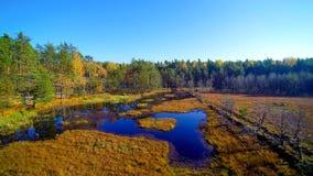 Εναέρια άποψη σχετικά με το δάσος και το έλος σε Celestynow ι Πολωνία στοκ εικόνες