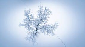 Εναέρια άποψη σχετικά με το δέντρο που καλύπτεται με τον πάγο και το χιόνι Στοκ Εικόνα