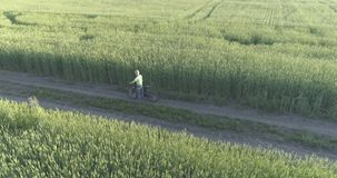 Εναέρια άποψη σχετικά με το νέο αγόρι, το οποίο οδηγά ένα ποδήλατο μέσω ενός τομέα χλόης σίτου στον παλαιό αγροτικό δρόμο Φως του απόθεμα βίντεο
