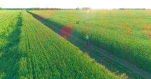 Εναέρια άποψη σχετικά με το νέο αγόρι, το οποίο οδηγά ένα ποδήλατο μέσω ενός τομέα χλόης σίτου στον παλαιό αγροτικό δρόμο Φως του φιλμ μικρού μήκους