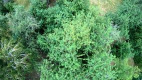 Εναέρια άποψη της ανακύκλωσης στο πάρκο Κατακόρυφος, από επάνω προς τα κάτω απόθεμα βίντεο