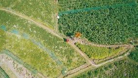 Εναέρια άποψη της γυναίκας στο κόκκινο φόρεμα που περπατά κατά μήκος των πράσινων τομέων στο Μπαλί απόθεμα βίντεο