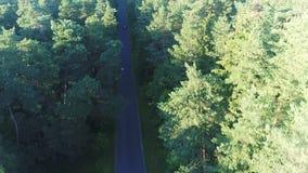 Εναέρια άποψη της οδήγησης σπορ αυτοκίνητο στο δάσος απόθεμα βίντεο
