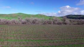 Εναέρια άποψη τοπίων της φυτείας φιλμ μικρού μήκους