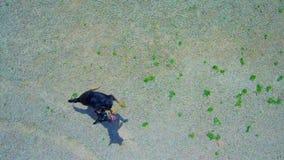Εναέρια άποψη του άλματος του σκυλιού για να πιάσει τον κηφήνα απόθεμα βίντεο
