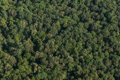 Εναέρια άποψη του δάσους στοκ εικόνα με δικαίωμα ελεύθερης χρήσης