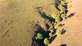 Εναέρια άποψη του αυστραλιανού κοπαδιού βοοειδών φιλμ μικρού μήκους