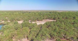 Εναέρια άποψη του δάσους και της λίμνης φιλμ μικρού μήκους
