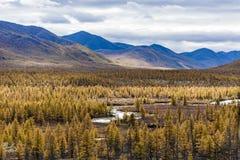 Εναέρια άποψη του δάσους στην Άπω Ανατολή, Ρωσία στοκ εικόνες