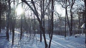Εναέρια άποψη του πάρκου στο χιόνι ενάντια στο λάμποντας ήλιο απόθεμα βίντεο