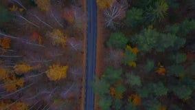 Εναέρια άποψη του παχιού δάσους το φθινόπωρο με την οδική κοπή κατευθείαν απόθεμα βίντεο
