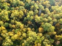 Εναέρια άποψη του παχιού δάσους το φθινόπωρο στοκ εικόνες