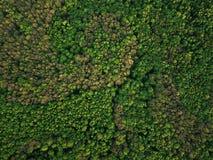 Εναέρια άποψη του πράσινου μικτού αποβαλλόμενος-κωνοφόρου δάσους στοκ φωτογραφίες