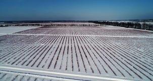 Εναέρια άποψη του τομέα βακκινίων το χειμώνα φιλμ μικρού μήκους
