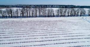 Εναέρια άποψη του τομέα βακκινίων το χειμώνα απόθεμα βίντεο