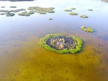 Εναέρια άποψη του φυσικού νησιού καλάμων υγρότοπων λιμνών Στοκ Εικόνες