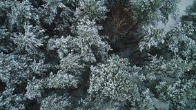 Εναέρια άποψη του χειμερινού χιονώδους δάσους απόθεμα βίντεο