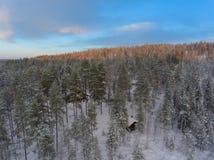 Εναέρια άποψη του χειμώνα snowscape και του δάσους Στοκ Εικόνες
