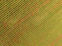 Εναέρια άποψη τρακτέρ φυστικιών Στοκ Φωτογραφίες