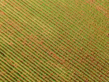 Εναέρια άποψη τρακτέρ φυστικιών Στοκ εικόνα με δικαίωμα ελεύθερης χρήσης