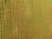 Εναέρια άποψη τρακτέρ φυστικιών Στοκ Εικόνα