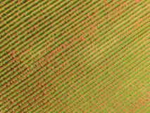 Εναέρια άποψη τρακτέρ φυστικιών Στοκ Εικόνες