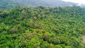 Εναέρια άποψη τροπικών δασών στοκ φωτογραφία με δικαίωμα ελεύθερης χρήσης