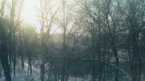 Εναέρια άποψη των άφυλλων δέντρων στο χιονώδες πάρκο ενάντια στον καμμένος ήλιο απόθεμα βίντεο