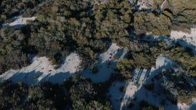 Εναέρια άποψη των ανθρώπων που περπατούν στο χειμερινό δάσος κοντά στα πράσινα κωνοφόρα δέντρα στην ηλιόλουστη χειμερινή ημέρα r  φιλμ μικρού μήκους