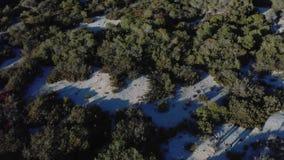 Εναέρια άποψη των ανθρώπων που περπατούν στο χειμερινό δάσος κοντά στα πράσινα κωνοφόρα δέντρα στην ηλιόλουστη χειμερινή ημέρα r  απόθεμα βίντεο