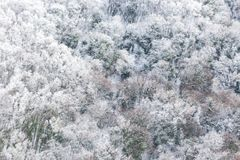 Εναέρια άποψη των δέντρων που καλύπτονται από το χιόνι σε ένα δάσος, στην πλευρά του βουνού Ουμβρία Subasio, που δημιουργεί ένα ε Στοκ Εικόνες