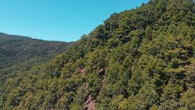 Εναέρια άποψη των δέντρων στο βουνό - ερυθρελάτες, πεύκο και άλλα αειθαλή κωνοφόρα δέντρα φιλμ μικρού μήκους