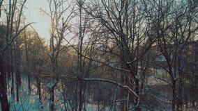 Εναέρια άποψη των δέντρων στο χιονώδες πάρκο ενάντια στο λάμποντας ήλιο απόθεμα βίντεο