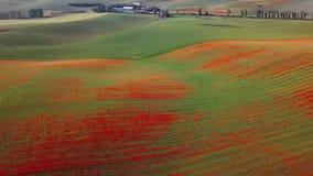 Εναέρια άποψη των λόφων παπαρουνών στη Μοραβία, Δημοκρατία της Τσεχίας φιλμ μικρού μήκους