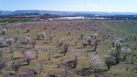 Εναέρια άποψη των μικρών δέντρων που αυξάνεται στις σειρές στους αγροτικούς τομείς μπροστά από την όμορφη λίμνη, έννοια γεωργίας  απόθεμα βίντεο