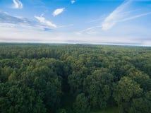 Εναέρια άποψη των πράσινων δέντρων πιό forrest Στοκ εικόνες με δικαίωμα ελεύθερης χρήσης