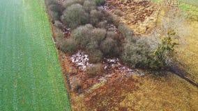 Εναέρια άποψη των τομέων και των δέντρων στο κραμπολάχανο στοκ φωτογραφίες