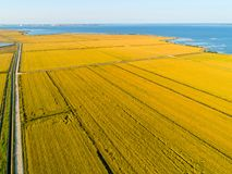 Εναέρια άποψη των τομέων ρυζιού Στοκ Εικόνα
