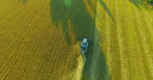 Εναέρια άποψη UHD 4K Η χαμηλή πτήση συνδυάζει τη θεριστική μηχανή συλλέγει το σίτο στον κίτρινο αγροτικό τομέα απόθεμα βίντεο