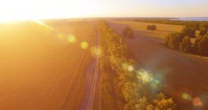 Εναέρια άποψη UHD 4K Χαμηλή πτήση πέρα από τον πράσινους και κίτρινους αγροτικούς τομέα σίτου και τη γραμμή δέντρων απόθεμα βίντεο
