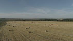 Εναέρια έρευνα για τους γεωργικούς τομείς το φθινόπωρο από το copter φιλμ μικρού μήκους